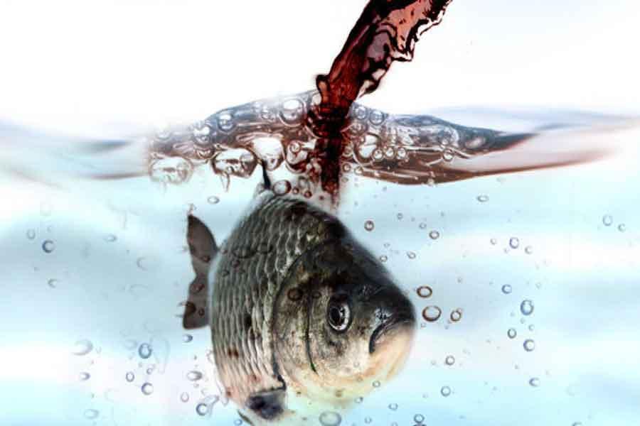 تصفیه فاضلاب کارخانه کنسرو ماهی